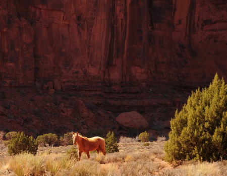 Wild horse Monument Valley north east Arizona Navajo Nation