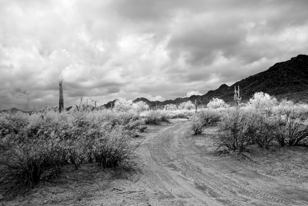 Infrared Dirt road leading off into the desert mountains 写真素材