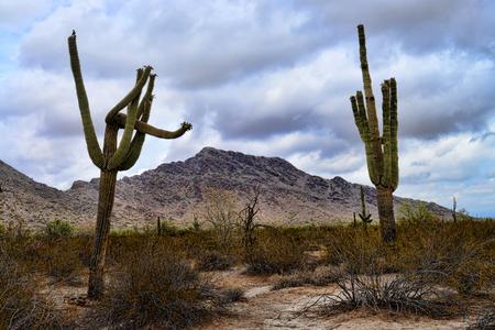 The Sonora desert and San Tan Mountains in central Arizona USA Stock Photo