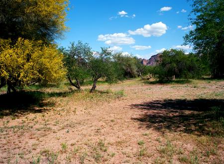 Usury mountain park near Phoenix Arizona Maricopa county Stock Photo