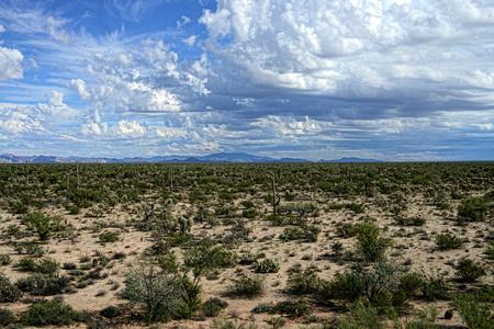 The Sonora desert in central Arizona USA