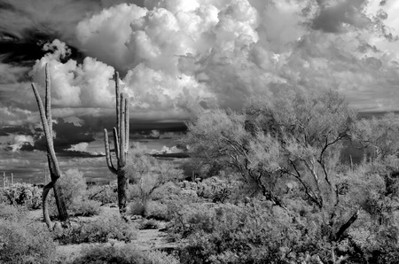 The Sonora desert in central Arizona USA in monochrome infrared Imagens