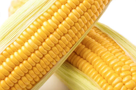 closeup of ripe corn skin on the cob on white background.