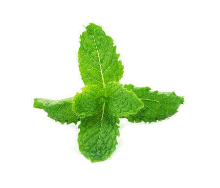 mint leaf isolated on a white background. Archivio Fotografico