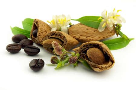 planta de cafe: Los granos de caf� y almendras con flores