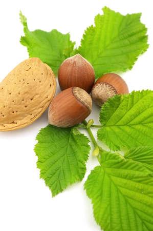 Almond with hazelnuts photo