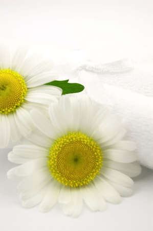 chamomile with leaves photo