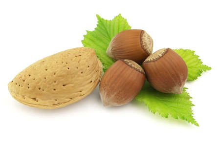 filbert: Filbert and almond