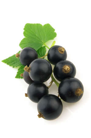 Blackcurrant photo