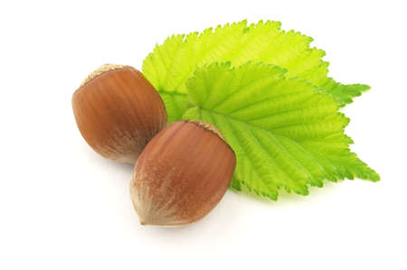 Hazelnuts with leaves photo