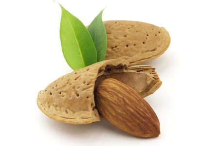 Almond with leaves photo