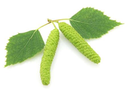 buds: Birch