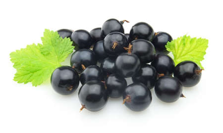 blackcurrant: Blackcurrant with leaves