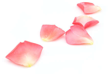 Rose petals on a white background Stock Photo - 7564532