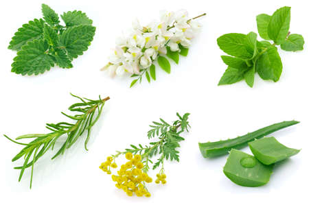 aloe vera flowers: Fragrant medicinal herbs