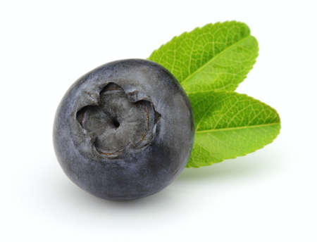 Blueberry with leaves Stock Photo - 9373384