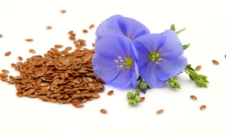 Seeds and flowers of flax Stock Photo - 9656294
