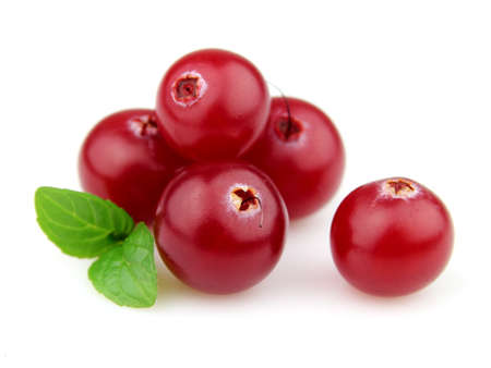 cranberry: Berry of cranberry with mint