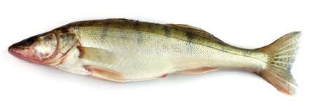 the perch: Pike perch on a white background
