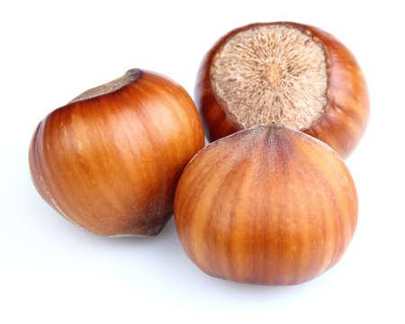 Hazelnuts in closeup photo