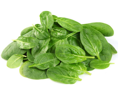 Fresh young spinach photo