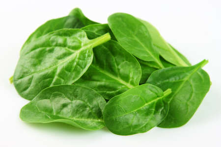 fresh spinach: Young leaves of spinach