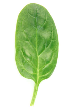 baby spinach: Leaf of spinach