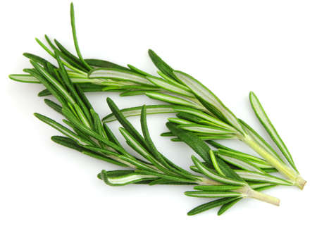 Rosemary spices photo