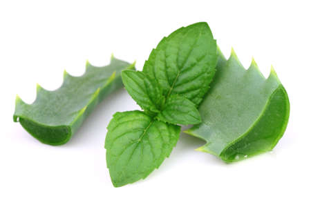wild mint: Aloe with mint Stock Photo