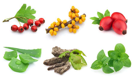 Herbs and berries on a white background photo