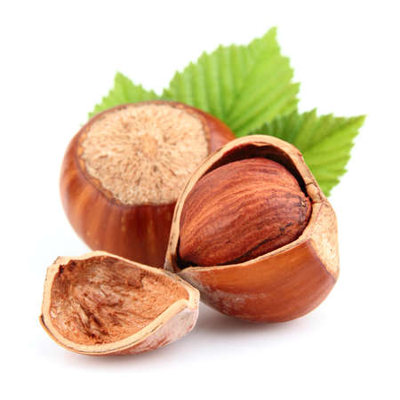 nutshells: Dried hazelnuts with leaves