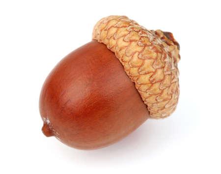 acorn nuts: Dried acorn in closeup