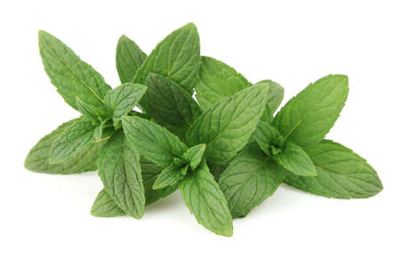 Fresh peppermint on a white background photo