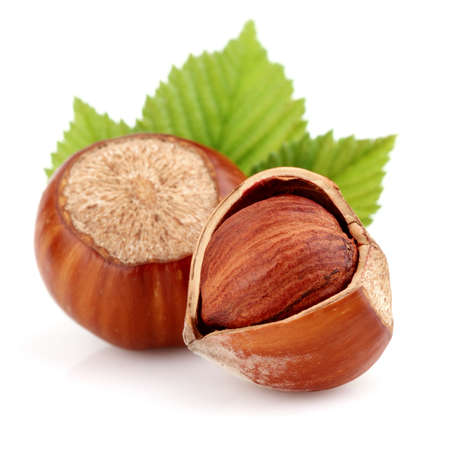 Dried hazelnuts with leaves photo