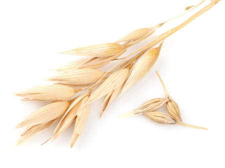 Ear of oats in closeup Stock Photo
