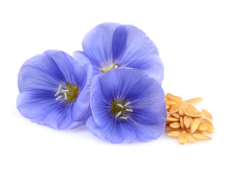 flax: Flax flowers with seeds