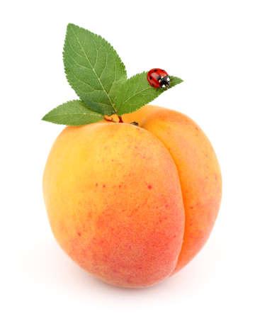 Rijpe abrikozen met lieveheersbeestje Stockfoto