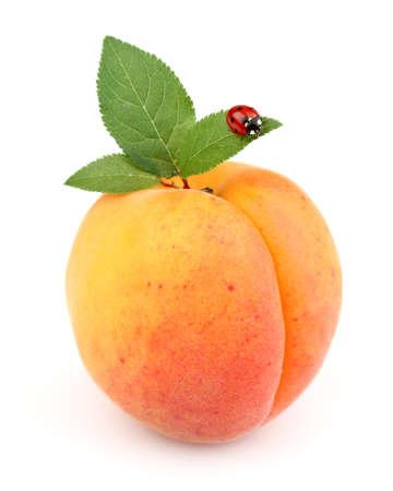 the peach: Ripe apricot with ladybug