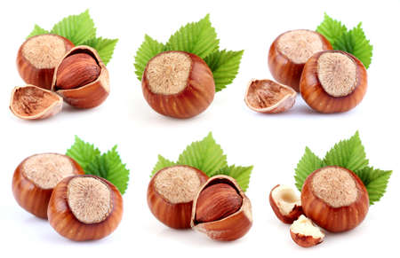 hazelnut: Collage from dried filbert Stock Photo