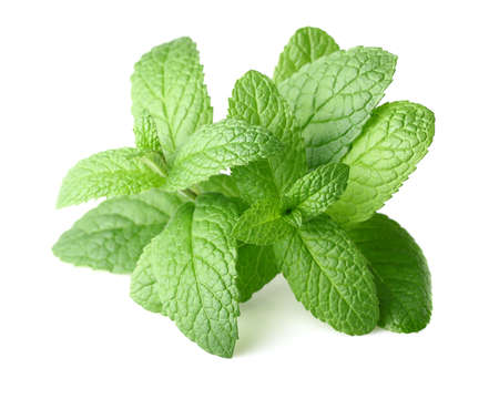 Peppermint in closeup Stock Photo