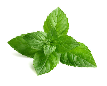 pile of leaves: Fresh mint in closeup