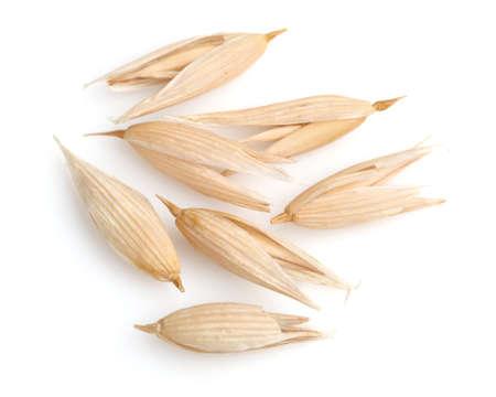 Grain of oats in closeup