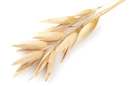 cebada: Oreja de avena en primer plano Foto de archivo