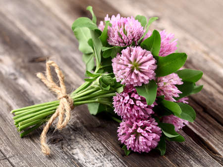 Red clover on a wooden background Stock Photo