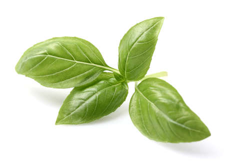Basil spice in closeup