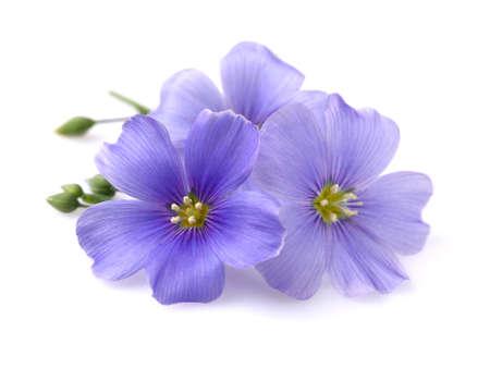 Vlas bloemen op een witte achtergrond