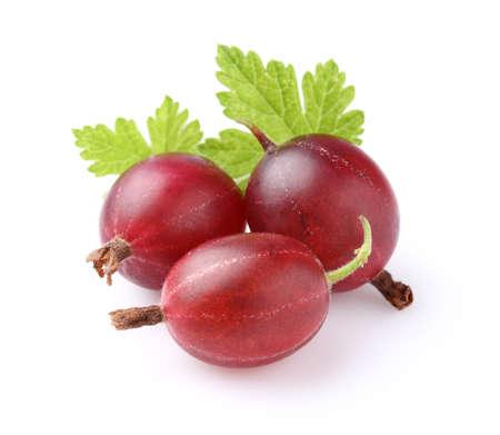 grosella: Grosella roja con las hojas Foto de archivo