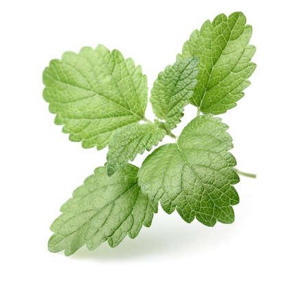 melissa: Leaves of melissa