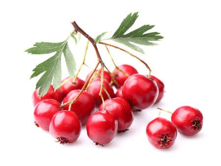 クローズ アップのサンザシの果実