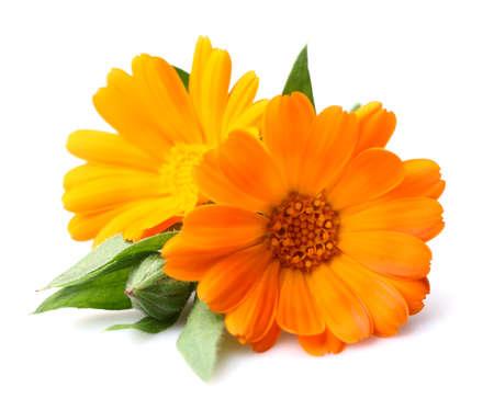 美容マリーゴールドの花 写真素材